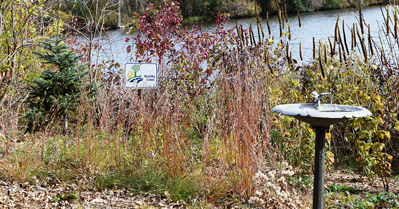 native garden planted along shoreline of beautiful home on a lake