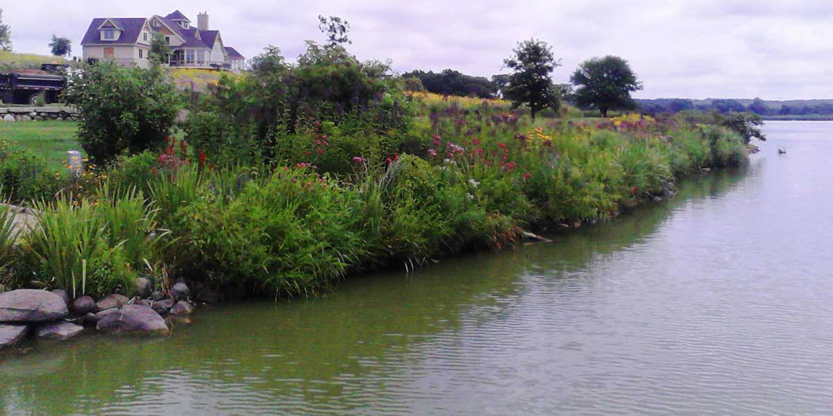 350ft2 Native Plantings along lake shoreline on a calm day, beautiful home in background, all flowers in full bloom