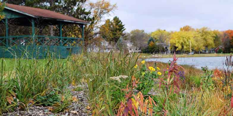 350ft2 Native Plantings along shoreline, park shelter in background, taken on a beautiful fall day
