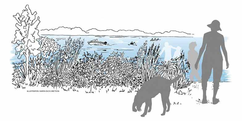illustration of 350ft2 native plantings along shoreline, people and dog enjoy the lake on a summer day, boats in background