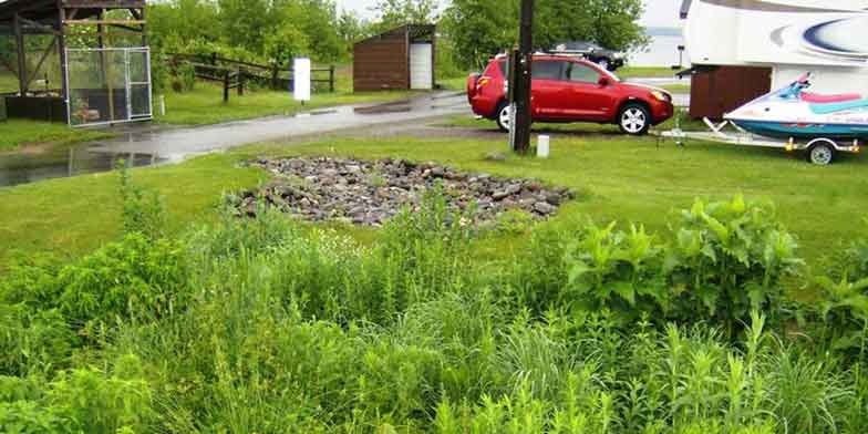 rain garden collecting water off street