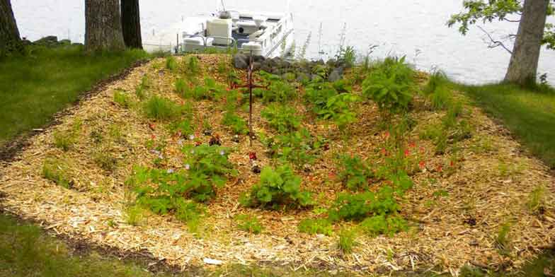 large rain garden planted atop a hill overlooking lake, pontoon boat in background on calm lake