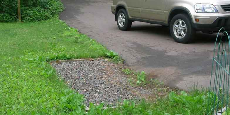 Rock infiltration implemented along side of driveway, next to parked car, oil, water and sand collect in driveway and flow through rock infiltration